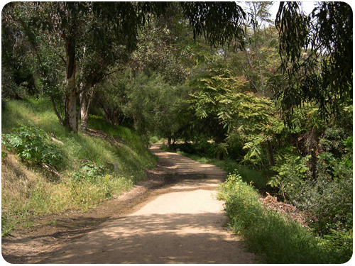 portola trail west of stadium way, elysian park, los angeles
