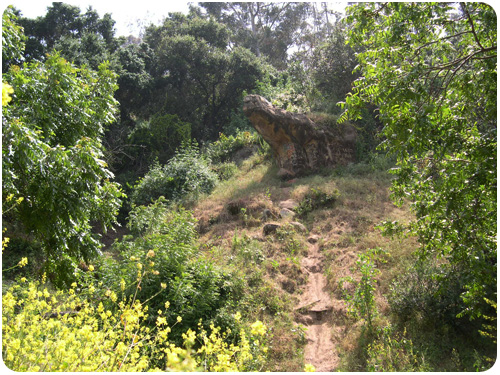 the portola trail in springtime, elysian park