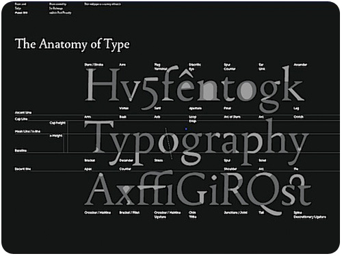 anatomy of type