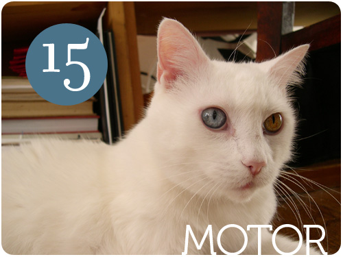 motor's 15th birthday