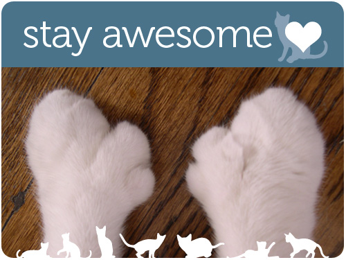 stay awesome, my cute cats
