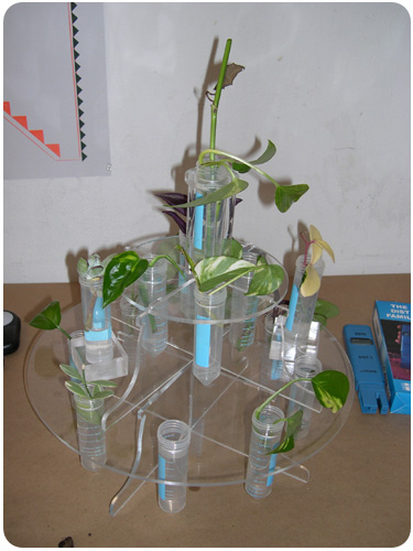 plant clones at machine project