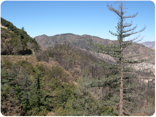 angeles crest forest, one year after the fire