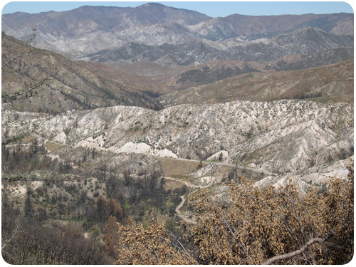 the low lands of big tujunga canyon, angeles crest forest 1 year after the station fire