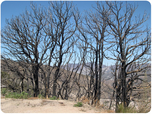 angeles crest, one year after the station fire