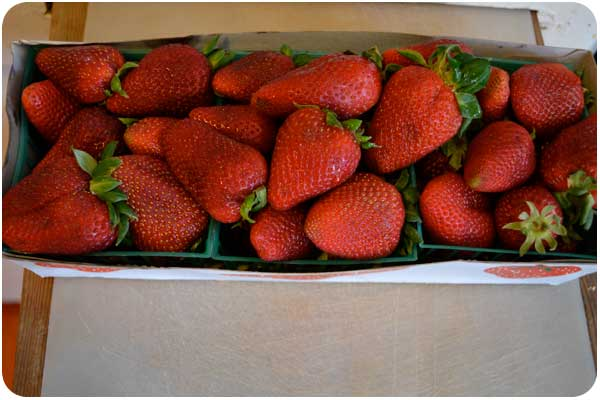 strawberry_3pack