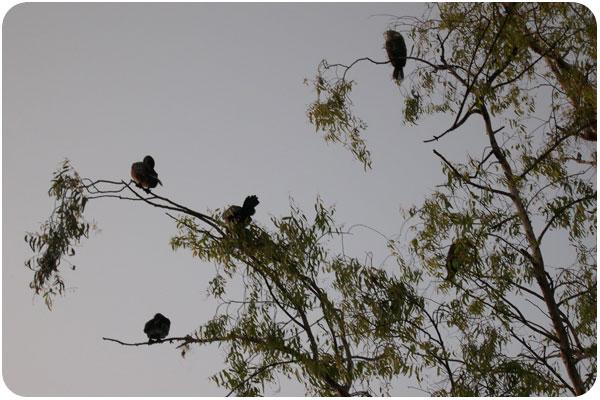 echopark_birdtree