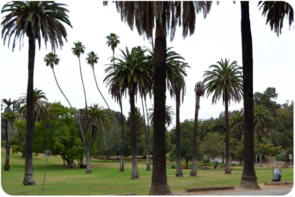 family picnic area at elysian park