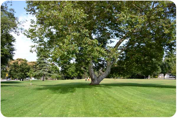 gwinn park green space