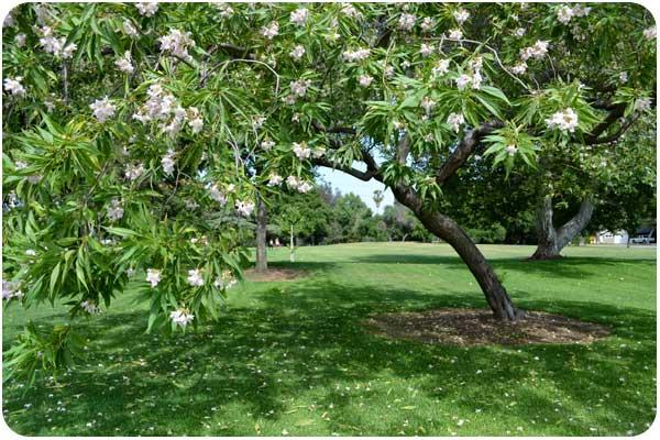 gwinn park floral tree