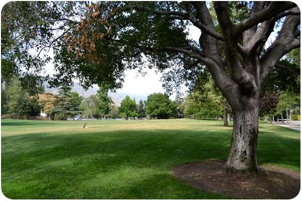 gwinn park oak tree