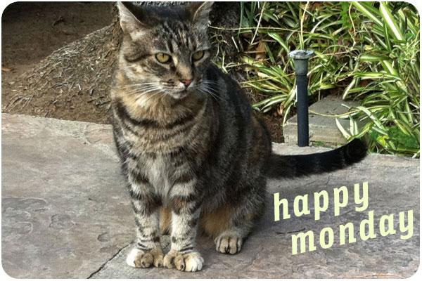 barlow hospital cat