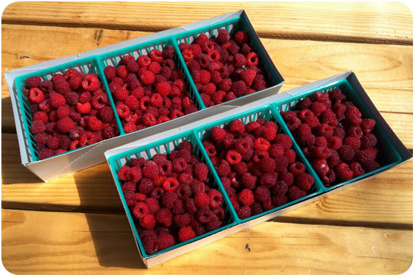 cartons of fresh raspberries from snow-line orchards