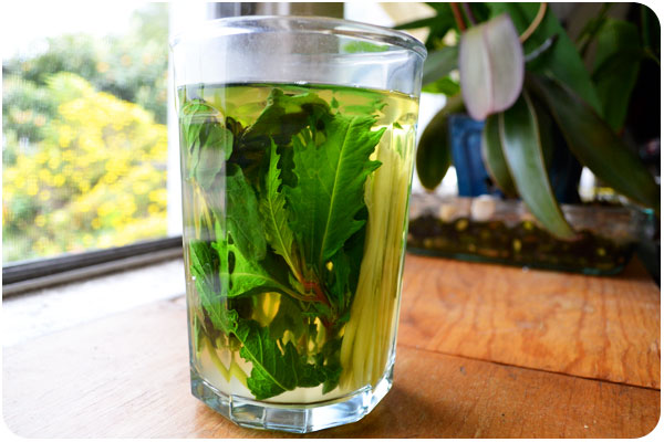 epazote mint & ginger tea
