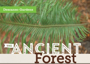 Ancient Forest opening invite